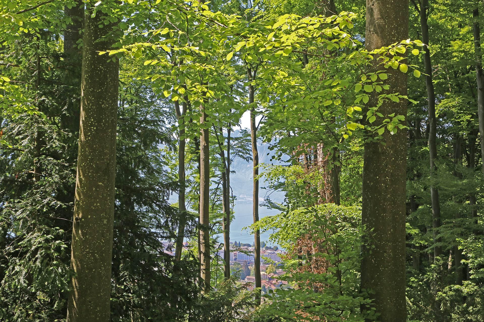 Forêt Sentier santé Marche Promenade
